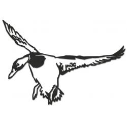 Canard en vol