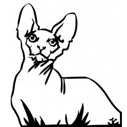 Chat Sphynx